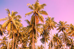Palm trees on a background of purple sky Royalty Free Stock Images