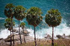 Palm trees on the background of the surf. Several palm trees grow beautifully on the background of the sea royalty free stock images