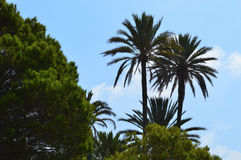 Palm Trees Backlit by the Sun - Tropical Background Or Backdrop royalty free stock photography