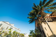 Palm trees in Balboa island Royalty Free Stock Images