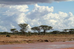 Palm trees on the banks of the Samburu River Stock Photo