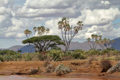 Palm trees on the banks of the Samburu River Royalty Free Stock Image