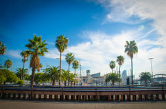 Palm trees in Barcelona. Palm trees against blue sky in the city of Barcelona stock image