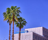 Palm Trees in Barcelona Spain Royalty Free Stock Images