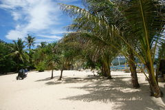 Palm trees on the beach. Excellent weather with palm trees on the beach and beautiful weather Stock Image