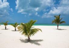 Palm trees on beach. Palm trees on a Mexican tropical beach Stock Photo