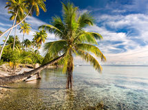 Palm trees beach. Palm trees hanging over blue lagoon waters near tropical beach Stock Photos