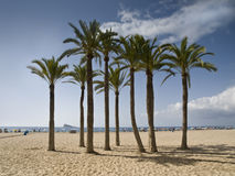 Palm Trees on the Beach. Tropical beach with some palm trees on the sand, with an island on the background Stock Images