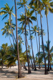 Palm trees on the beach Stock Photography
