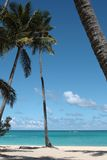 Palm trees on the beach. With sea and blue sky Stock Images