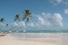 Palm trees on the beach. Palm trees on the caribbean beach with sea and blue sky Royalty Free Stock Photo