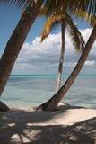 Palm trees on the beach. Palm trees on the caribbean beach Stock Photography
