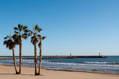 Palm Trees in the Beach. Of Valencia Royalty Free Stock Images
