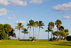 Palm trees at the beach Stock Photography
