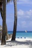 Palm trees on a beach Stock Photos