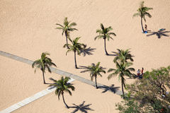 Palm Trees on the beach Stock Image