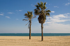 Palm trees on the beach Royalty Free Stock Image