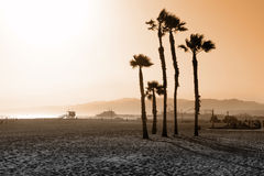 Palm trees on beach. Palm trees on ocean beach at sunset Royalty Free Stock Photography