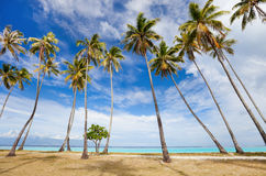 Palm trees beach Royalty Free Stock Photography