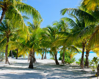 Palm trees at beach Royalty Free Stock Photo