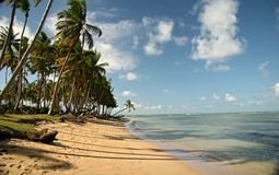 Palm Trees On The Beach. Tropical Scene On The Beach Of Caribbean Sea stock images