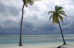 Palm trees on beach. Palm trees on tropical beach Stock Photos