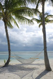 Palm trees on beach. Hammock hanging in palm trees on the beach Royalty Free Stock Photos