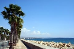 Palm Trees by beach. In resort of Larnaca, Cyprus Royalty Free Stock Photos