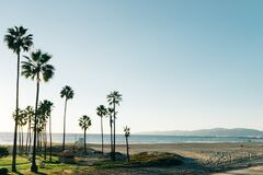 Palm trees on beach Royalty Free Stock Photo