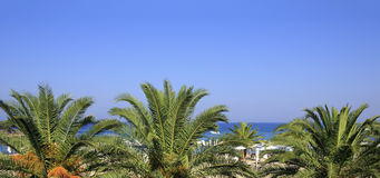 Palm trees on the beach of Aegean Sea. Stock Photo