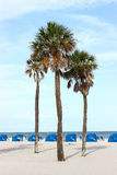 Palm Trees On The Beach. Against a blue sky stock image