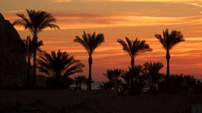 Palm trees on the beach against the sky before dawn stock footage