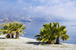 Palm trees on a beach in Almunecar Royalty Free Stock Image