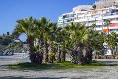 Palm trees on a beach in Almunecar, Andalusia. Region, Costa del Sol, Spain Stock Photo