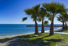 Palm trees on a beach in Almunecar, Andalusia region, Costa del. Sol, Spain Stock Photo