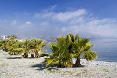 Palm trees on a beach Stock Image