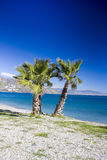 Palm trees on a beach in Almunecar, Andalusia region Stock Images