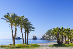 Palm trees on a beach in Almunecar, Andalusia Royalty Free Stock Photography