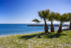 Palm trees on a beach in Almunecar, Andalusia region, Costa del Royalty Free Stock Photography