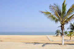 Palm Trees on a Beach in Angola Stock Image
