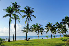 Palm trees at the beach. Beautiful palm trees at the beach Indian ocean Stock Photos