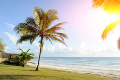 Palm trees at the beach. Beautiful palm trees at the beach Indian ocean Royalty Free Stock Image