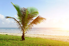 Palm trees at the beach. Beautiful palm trees at the beach Indian ocean Stock Images