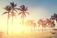 Palm trees at the beach. Beautiful palm trees at the beach Indian ocean Royalty Free Stock Photography