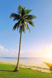 Palm trees at the beach. Beautiful palm trees at the beach Indian ocean Royalty Free Stock Photo