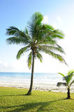 Palm trees at the beach Royalty Free Stock Photography