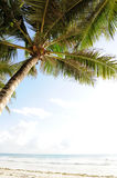 Palm trees at the beach Royalty Free Stock Images
