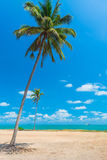 Palm trees on the beach. Stock Photography