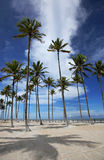 Palm trees on the beach, Brazil. Stock Photos