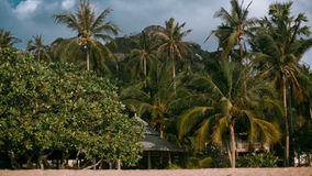 Palm trees on the beach. Bungalows and palm trees on the beach